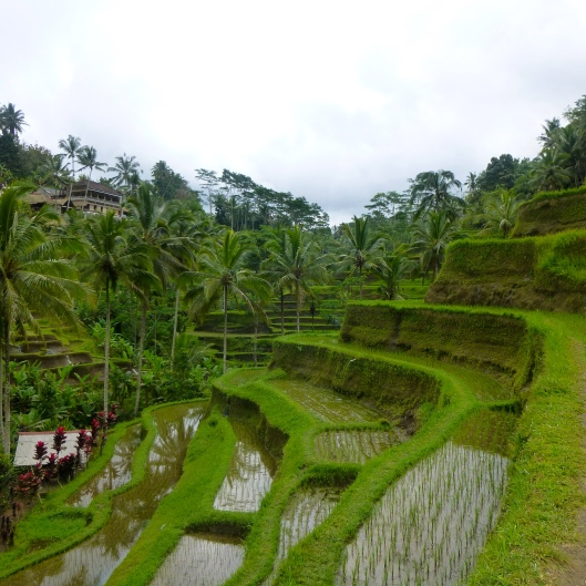 Telangalang Rice terrace